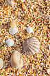 Sand, Pebbles, Shells, Sea Coast Close-up stock image