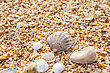 Scallop Sand, Pebbles, Shells, Sea Coast Close-up stock photography