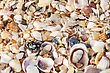 Scallop Sand, Pebbles, Shells, Sea Coast Close-up stock photo