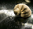 Sea Shell On The Wet Background stock photography