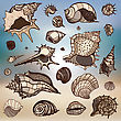 Sea Shells Collection. Hand Drawn Vector Illustration. Sea Background