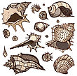 Sea Shells Collection. Hand Drawn Vector Illustration stock vector