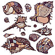 Sea Shells Collection. Hand Drawn Vector Illustration