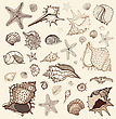 Sea Shells Collection. Handdrawn Vector Illustration stock vector