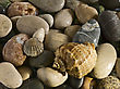 Sea Shells On Stones stock photography