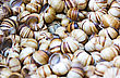 Seamless Background From Snail Shells stock photo