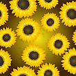 Seamless Background Pattern With Sunflowers, Graphic Art