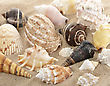 Seashells On The Sand ,Close Up stock photography