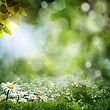 Seasonal Natural Backgrounds With Daisy Flowers stock image