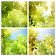 Set Of Assorted Summer Backgrounds With Green Foliage And Beauty Bokeh stock illustration