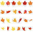 Set Of Autumn Maple Leaves In Different Shapes Over White Background. Ideal For Creating Fall Designs. Vector Illustration stock vector