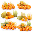 Set Of Cape Gooseberry (physalis) stock photography