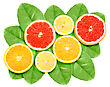 Set Of Cross Citrus Fruits On Green Leaf Close-up Studio Photography