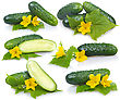 Set Of Cucumber Vegetables With Leafs And Flowers