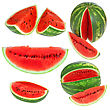 Set Fresh Watermelon And Slices Isolated stock image
