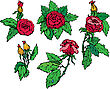 Set Of Hand Drawn Roses Flowers - Design Elements