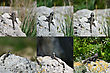 Set - Lizard Hardun On A Rock. Laudakia Stellio Lizard Hunting stock photography