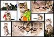 Set Of Pictures Of Funny Little Kittens stock photo