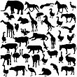 Set Silhouettes Animals And Birds In The Zoo Collection. Vector Illustration