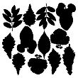 Set Of Silhouettes Of Leaves. Oak, Mountain Ash, Birch, Aspen, Poplar And Hawthorn. Isolated On White. Vector Illustrations.