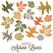Set Of Watercolor Colorful Autumn Leaves. Vector Illustration