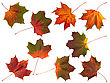 Set Of Yellow And Red Autumn Maple Leaves stock photography