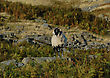SHEEP ON ROCKY OUTCROP stock photo
