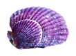 Clam shell stock image