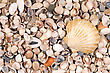 shells background stock photo