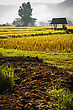 Silhouette Hut In Rice Field In Morning Time In Thailand stock image