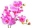 Single Artificial Branch Flowers Of Pink Orchid. Isolated On White Background. Close-up. Studio Photography