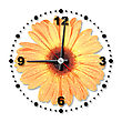 Hour Single Orange Flower As A Office Clock Close-up Studio Photography stock photography