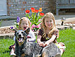 Sisters in the Front Yard with Their Dog stock photography