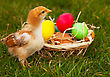Small Baby Chickens With Colorful Easter Eggs Outdoors At Sunny Day