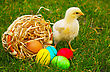 Small Baby Chickens With Colorful Easter Eggs Outdoors On A Sunny Day stock image