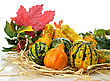 Small Colorful Gourds Collection With Autumn Leaves stock photo