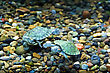 Small Green Creeping Terrapin stock photography