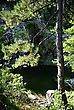 Small Pond With Clear Green Water Hidden In Pine Forest At Sunny Summer Day