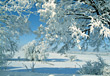 Snowy Winter Scene stock photo