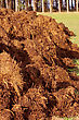 Spreading Of Manure Heaps Or Slurry For Organic Farming stock photo