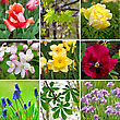 spring colors flowers collage stock photo