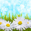Spring Daisy Field. Easter Card Background