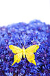 Spring Flowers Blue Cornflower With Yellow Butterfly Wallpaper Backdrop