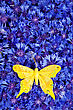 Birthday Spring Flowers Blue Cornflower With Yellow Butterfly Wallpaper Backdrop stock image