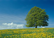 Spring Landscape with Tree and Blooming Flowers stock photo