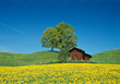 Spring Landscape with Farm Building stock photography