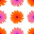 Spring Pink Orange Flowers Isolated On White Background. Seamless Flower Pattern
