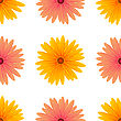 Spring Pink Yellow Flowers Isolated On White Background. Seamless Flower Pattern