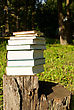 Stack Of Books Laying Outdoors On The Stump stock photo