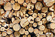 Stack Of Finished Birch, Aspen And Pine Logs stock photo